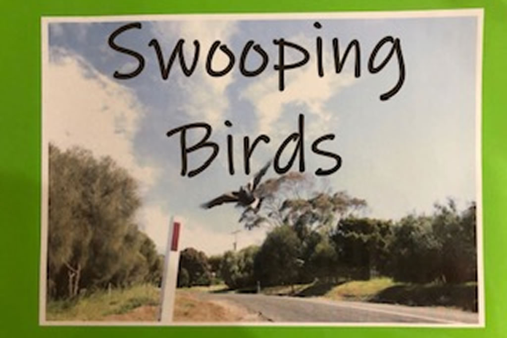 Kindy class investigates 'Swooping Magpies' in Term 3